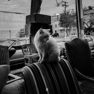 Chile © Alfredo Velarde-123